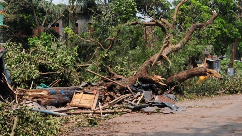 A tree uprooted in Sandhyamath para area in Krishnanagar due to storm