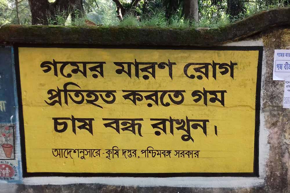 A wall graffiti to make people aware about ban on wheat cultivation