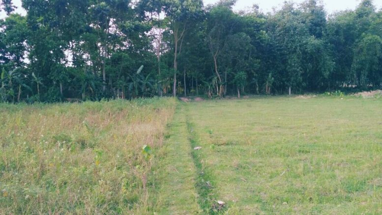 A farm land in Sutro village left uncultivated due to fear of snakes