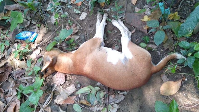 One of the dogs lying dead in Bethuadahari