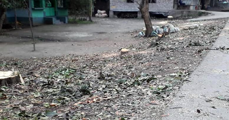 Stumps of the felled trees on the adjacent land of the existing Chakdaha-Bongaon road proposed to be widened